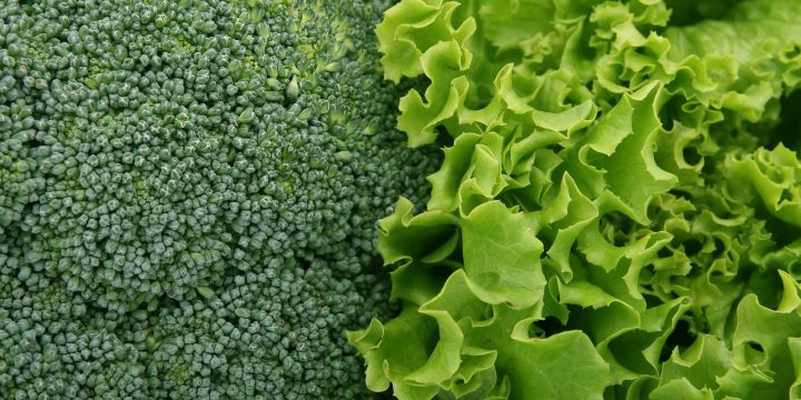 E. Coli Outbreak can be Learning Opportunity for Leafy Greens Industry